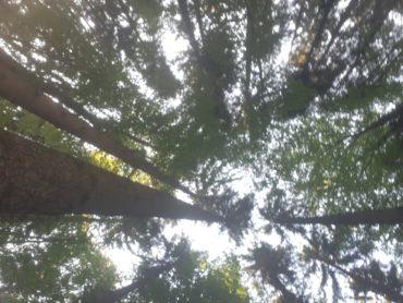 Wald Kraft